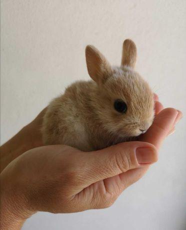 Gaiola nova + coelhos anões + comida