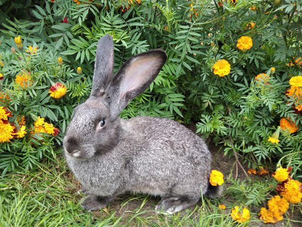 Кролі, кролики, змішані