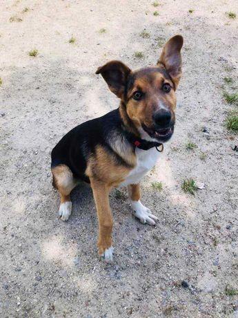 Mehdi - cachorro porte grande