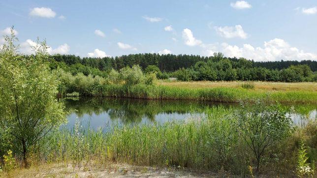 Отдых на озере в сосновом лесу