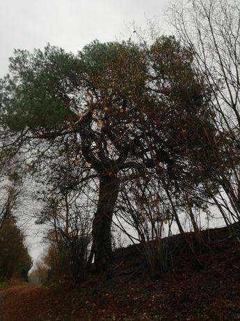 Las # Rzeka # Cisza #  Możliwość Zabudowy.
