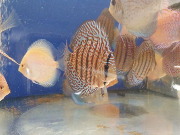 Paletka XL krajowa kilka odmian od Tapajos.pl W-wa dużo ryb i roślin