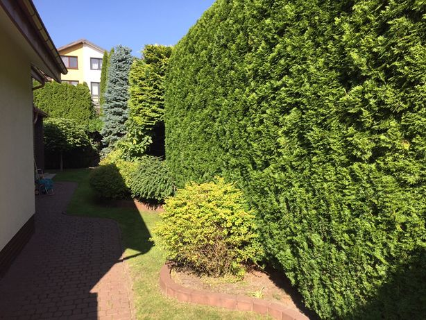 Pielęgnacja ogrodu, trawnika, podcinanie żywopłotu, tui