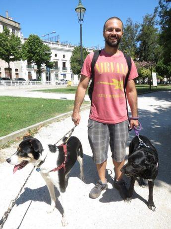 Passeio Amigo - Dog Walking / Pet Sitting - Passeio de cães - Lisboa