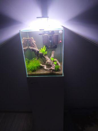 Krewetkarium 30l/zamiana terrarium