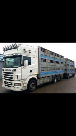 Transporte de animais (gado) bom preço