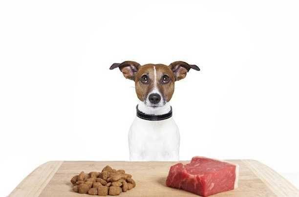 М'ясний корм для собак та котів