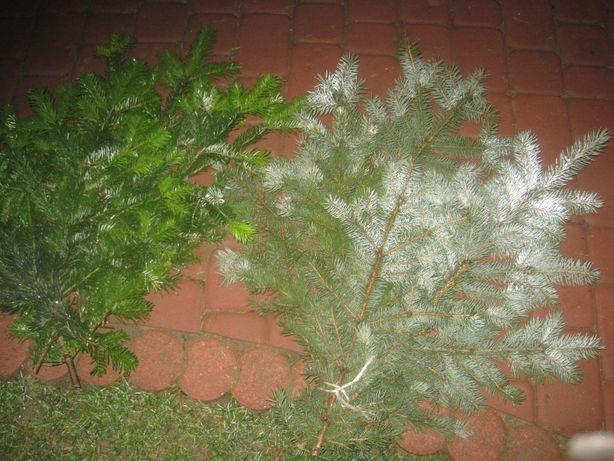 gałązki jodły na grób cmentarz do wazonu na stroik stroiki świąteczne