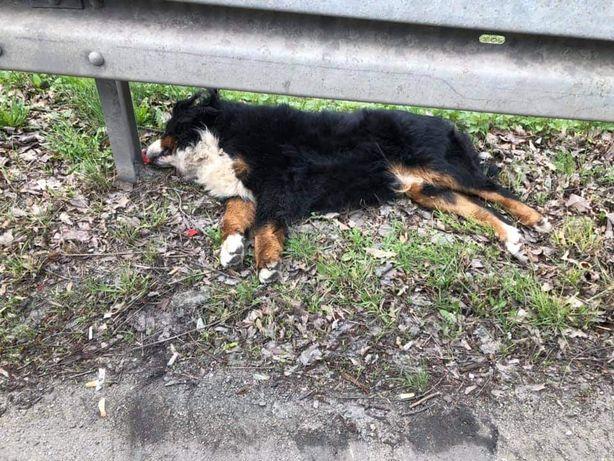 Znaleziono  psa-nie żyje
