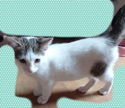 Oddam 4 miesięcznego kota