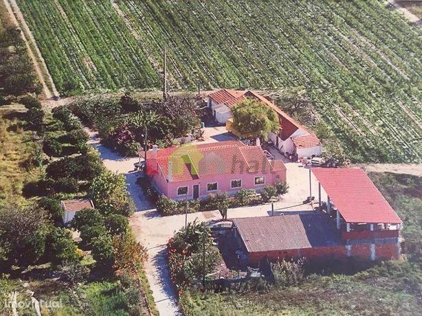 Herdade de vinha com 6 hectares | 2 casas térreas | arrecadações | árv