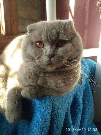 Вислоухий котик приглашает кошечек на вязку