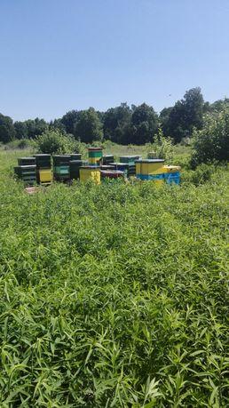 Pasieka, pszczoły, ule, miodarka, suszarka do pyłku