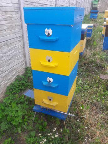 Пчелы, семьи и отводки