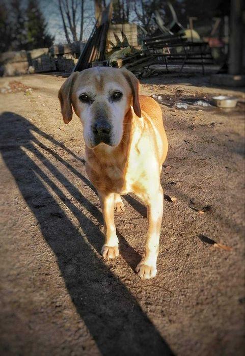 Psiak do adopcji Kolbuszowa - image 1