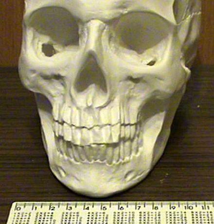 Череп из гипса, череп гипсовый ручная робота