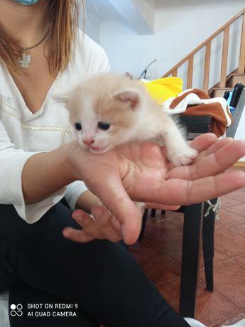 Gatinhos bebés pelo comprido