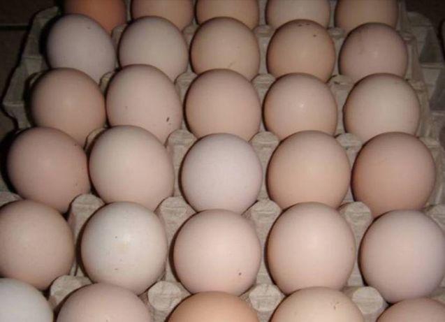 Jajka wiejskie 0,80