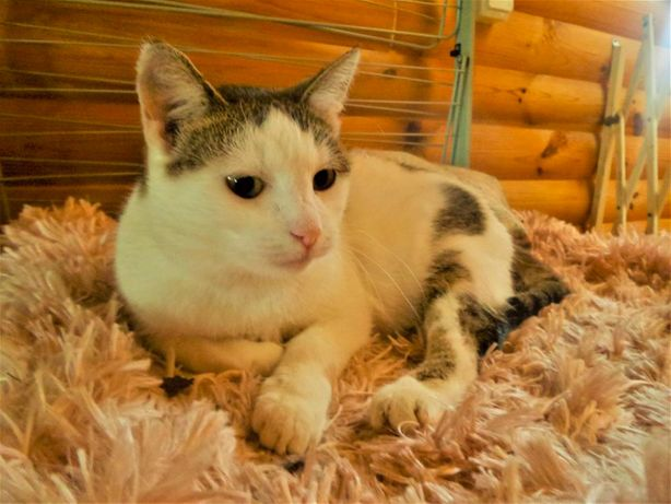 Novia - śliczna, młoda koteczka szuka domu