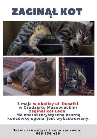 Zaginął kot! Grodzisk Maz i okolice