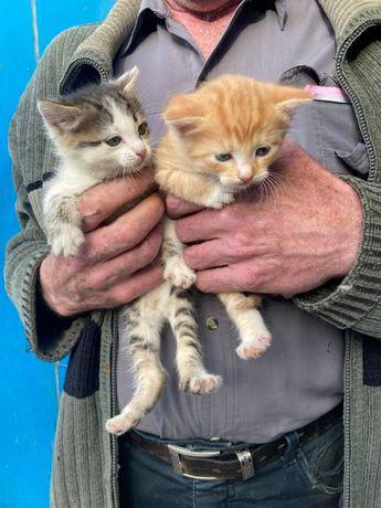 Котёнок девочка ищет любящий дом