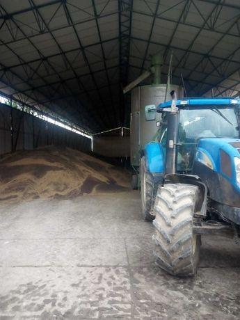 Wynajem suszarni suszarnia 1500zl/24h suszenie kukurydzy Agrimec1000AS