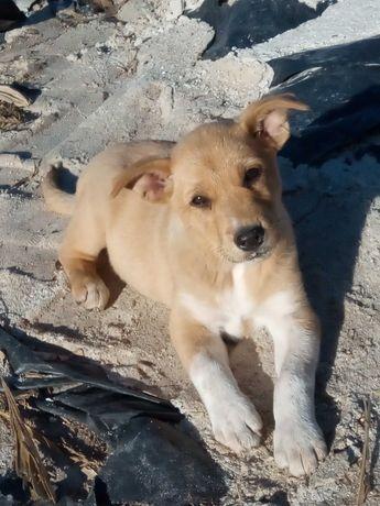 Dou cadelinha bebé - doação responsável
