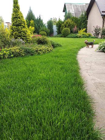 Трава, газон, ландшафт, автополив