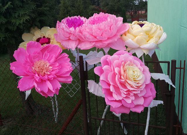Kwiaty krepina gigant róże piwonia