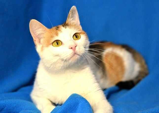 Трехмастная маленькая кошка Милли, 1 год