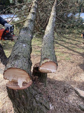 Rębak do gałęzi, wycinka drzew, zwyżka, karczowanie działek