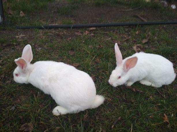 Мясо кролика на 24.11