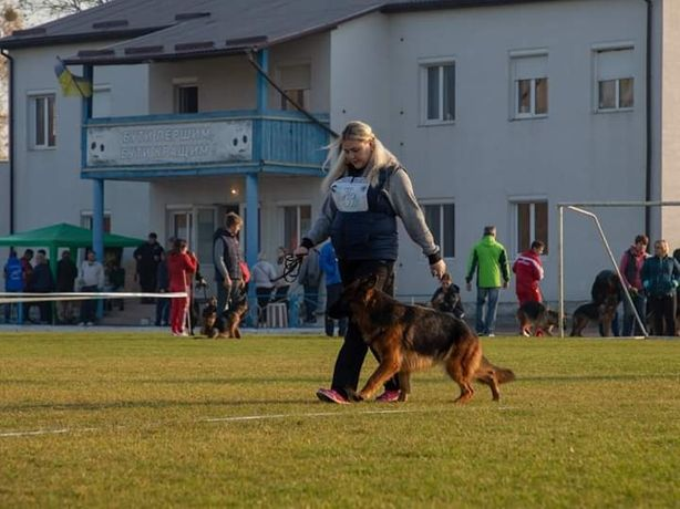 Дрессировка щенков и взрослых собак.