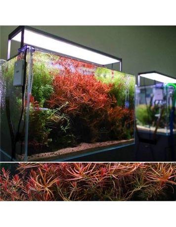 Calha aquario