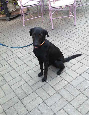 Подобран щенок возле Оперного, ищет новый дом