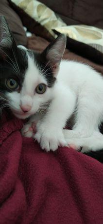 Dou gato macho de 2 meses para adoção