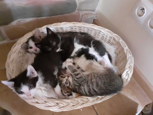 Małe Kotki, kocięta oddam za darmo