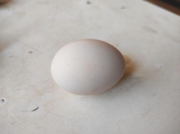 Jajka wiejskie ekologiczne od kur z wolnego wybiegu