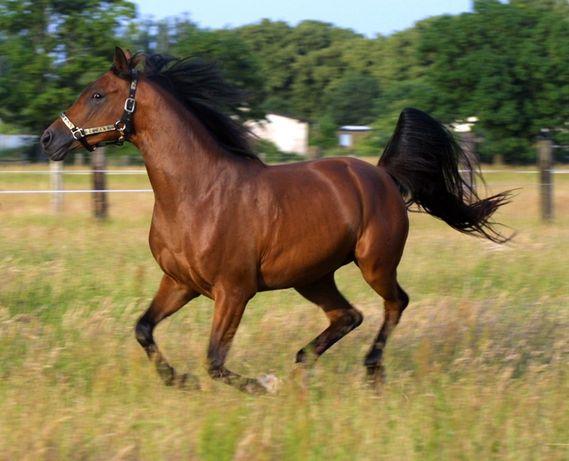 Продажа, обмен, купівля коней