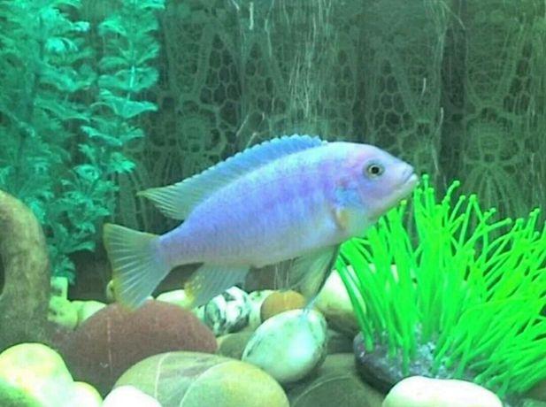Обслуживание аквариумов недорого