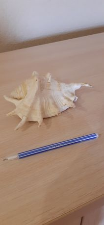 Ракушка 100р для аквариума