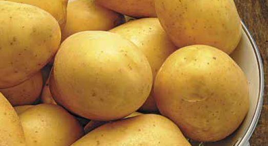 Ziemniak sadzeniak MARABEL kwalifikat 2021