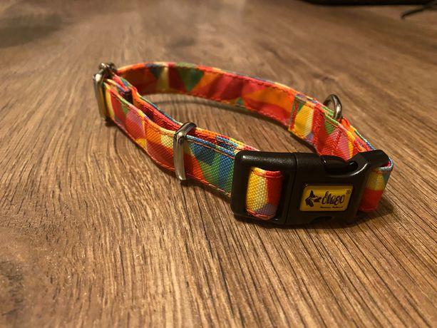 Obroża Dingo kolorowa 2cm