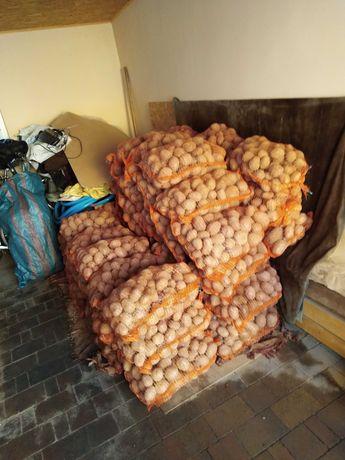 Ziemniaki wielkość sadzeniak Vineta Belarosa