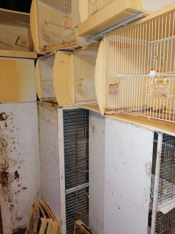 21 gaiolas orniex 4quatro viveiros com cerca de 100 comedouros nas dev