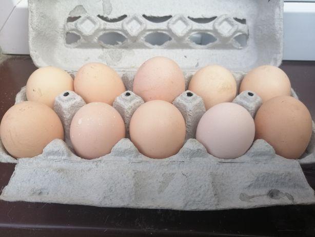 Świeże jajka jaja od kur z wolnego wybiegu
