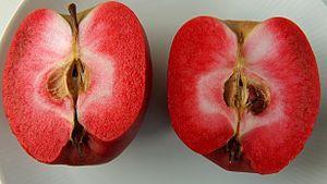 MEGA RARO - Maçâ carne Vermelha - SUPER DOCE - Planta viva de coleção Marco - imagem 1