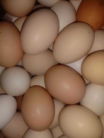 Jajka, jaja wiejskie