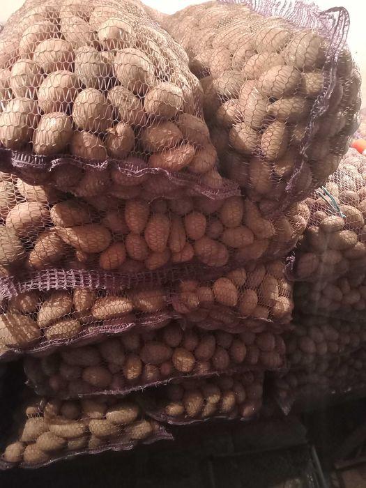 Продам картофель Голая Пристань - изображение 1