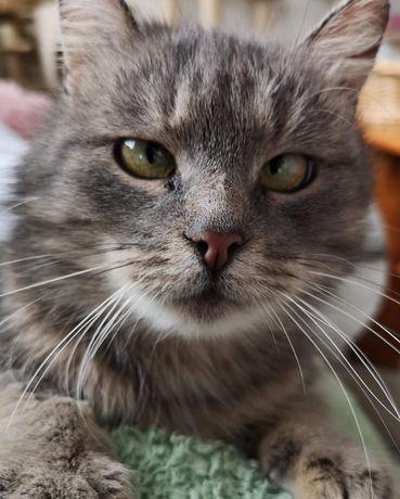 Cudowna kotka Zezia szuka domu